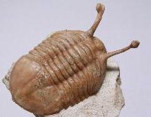 окаменелости, палеонтология