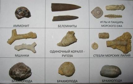 коллекции окаменелостей